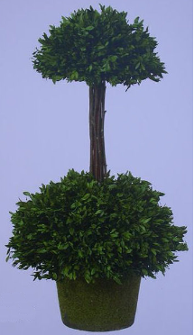 Boxwood Garden Collection - Double Topiary